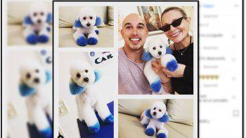 Con los perros no: Carmen Barbieri le hizo un cambio de look al perro y la destrozan en las redes