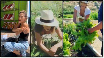 Los insólitos videos de la nueva vida de Victoria Vanucci: ahora tiene una huerta y planta verduras