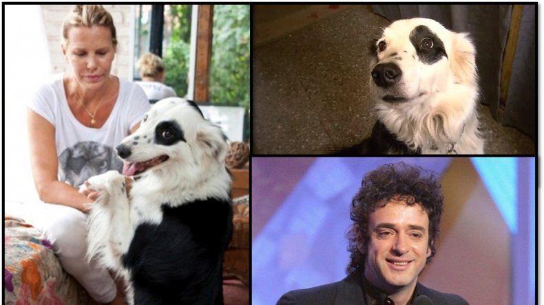 La conmovedora historia de Jack, el perro de Gustavo Cerati: Tiene una conexión especial con chicos enfermos