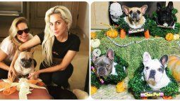 ¡Todo por ellos! Lady Gaga ofrece $500 mil por sus perros