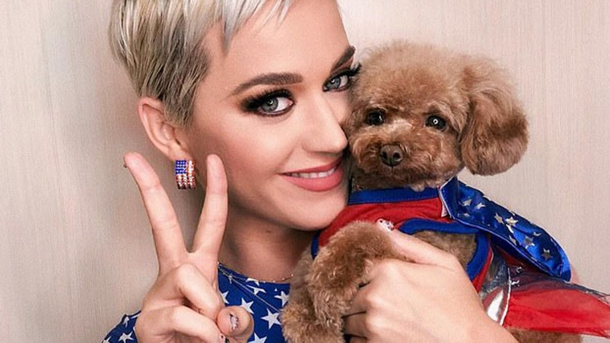 La cantante y actriz Katy Perry junto a su perro Nugget
