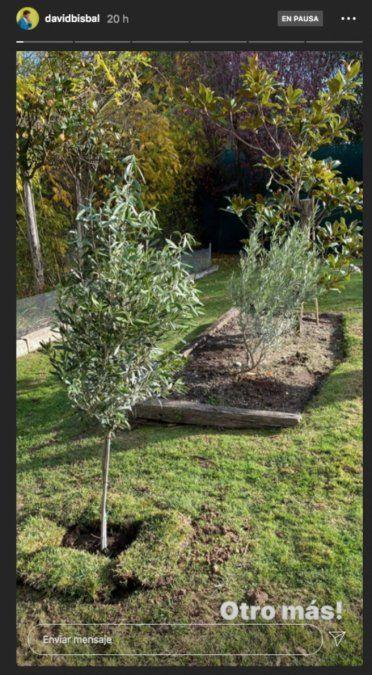David Bisbal continúa su tradición de plantar árboles con sus hijos