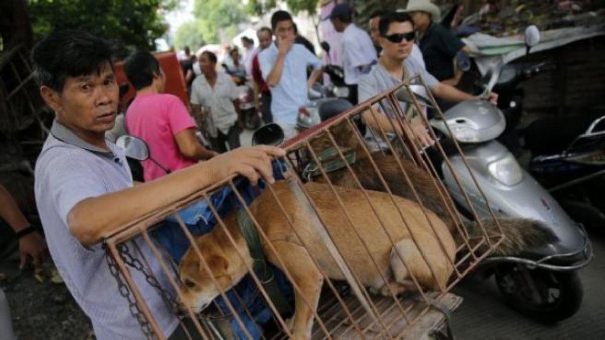 El festival de carne de perro se realiza todos los años en China