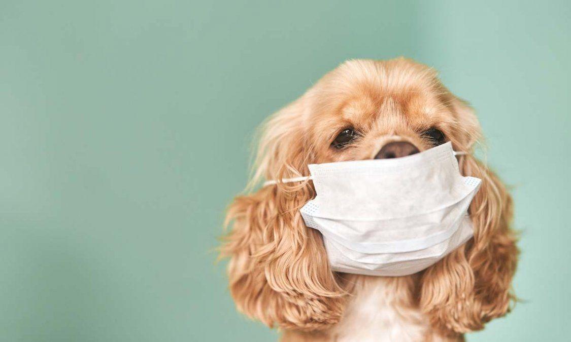 Las mascotas están a la deriva cuando sus dueños son internados por coronavirus