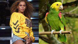 ¿Es posible? ¡Beyoncé es imitada por un loro!
