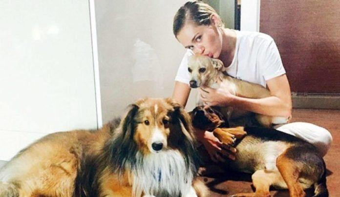 ¡La mejor compañía! Las inseparables mascotas de Paris Hilton y Miley Cyrus