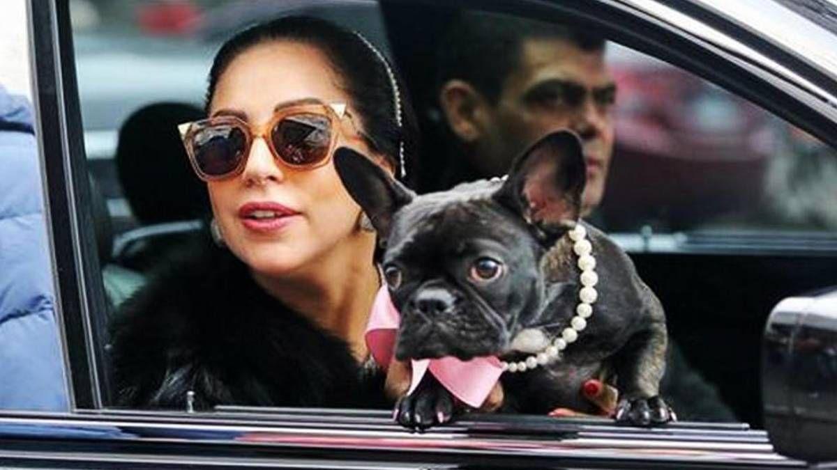 ¡Ilesos! Lady Gaga recuperó a sus perros