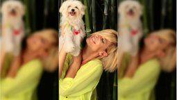 La actriz Eugenia Tobal nos permitió conocer a través de su Instagram a Romeo su perro. La mascota sufrió un accidente y los seguidores se preocuparon
