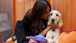 ¡Cómo le encantan! Salma Hayek ahora es la reina de los animales