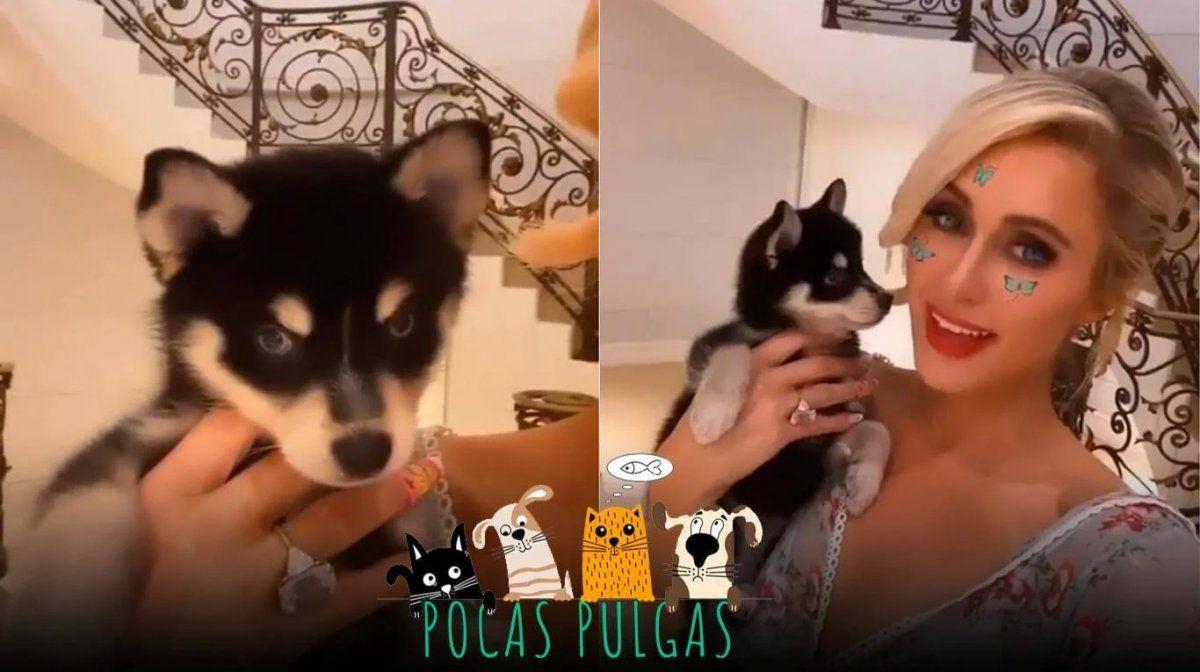 Paris Hilton presenta a su nuevo y adorable cachorro