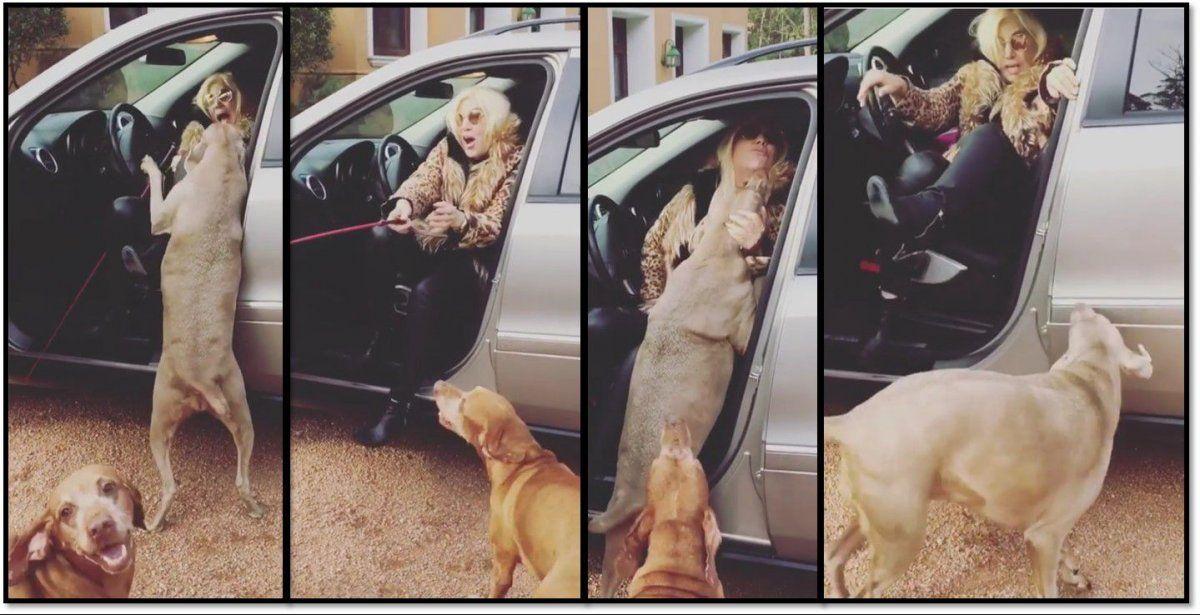 Los nuevos posteos de Susana y la insólita promo en la que sus perros se le abalanzan