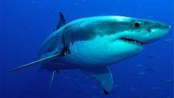 Un tiburón blanco sorprendió a un hombre que estaba pescando.