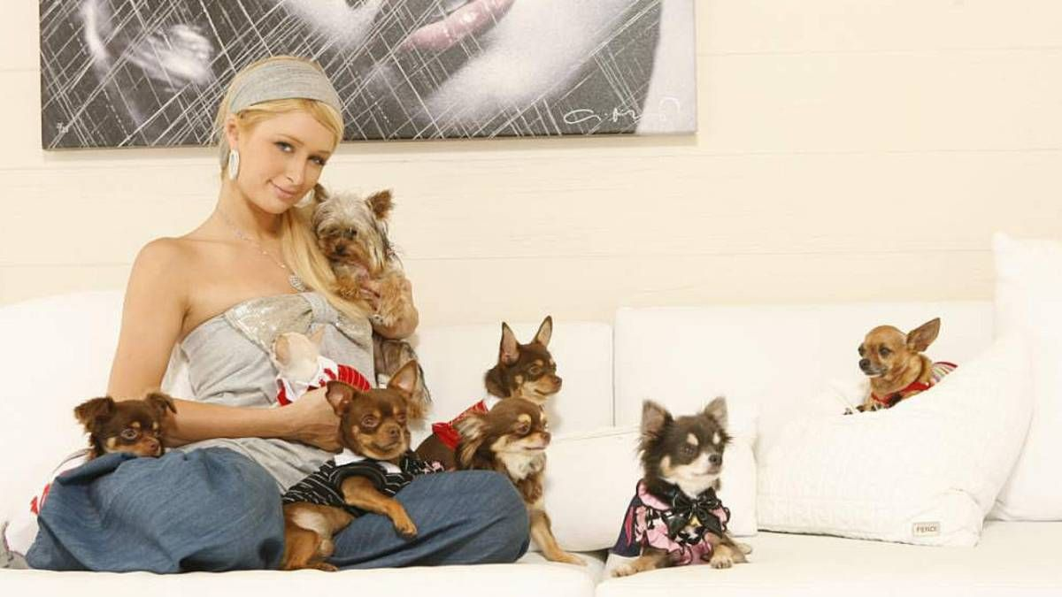¡Excéntrica! Paris Hilton gastó mucho dinero en una mascota