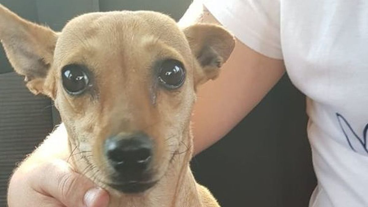 No está bien de la cabeza: Graban in fraganti espantoso maltrato animal en Sevilla