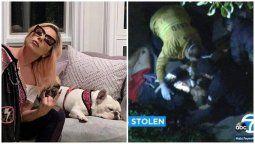 ¡Mucho dinero! Lady Gaga y la recompensa a quien encontró a sus perros