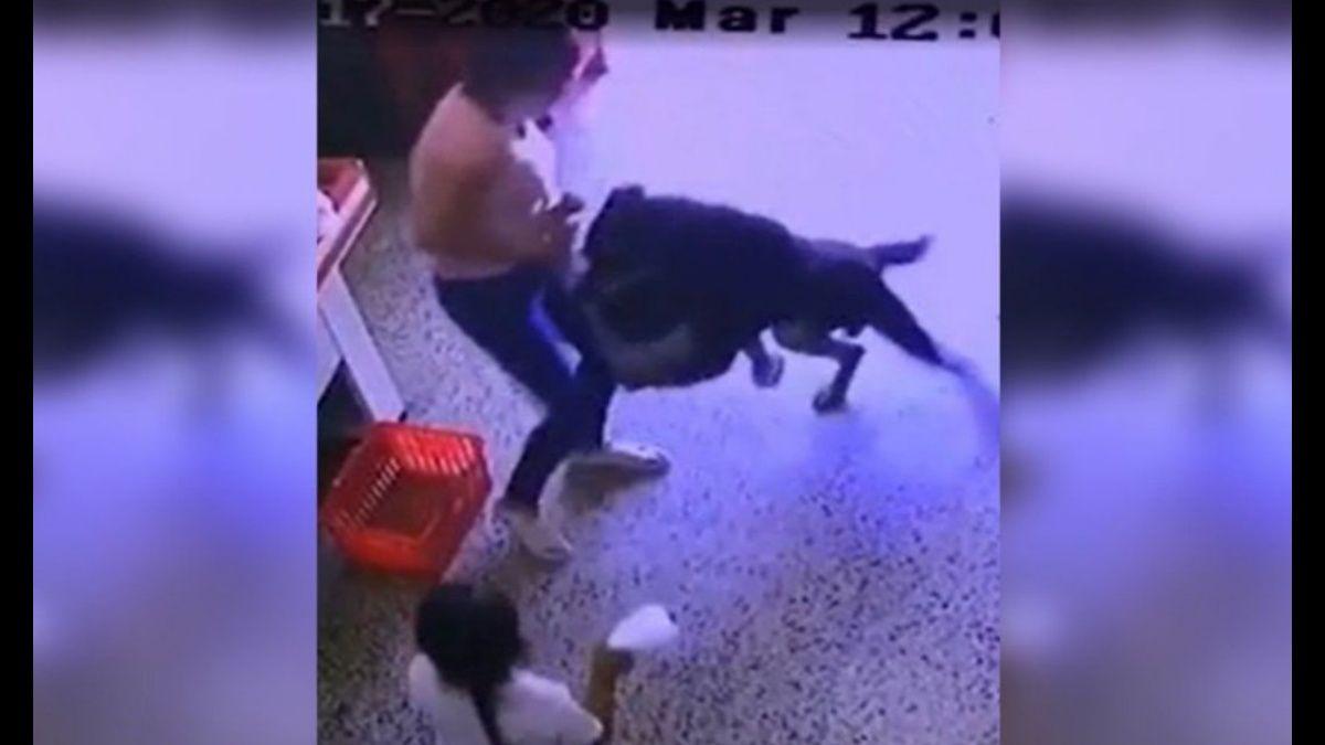 Estremecedor video: el momento en que un perro ataca a un nene en la puerta de un supermercado