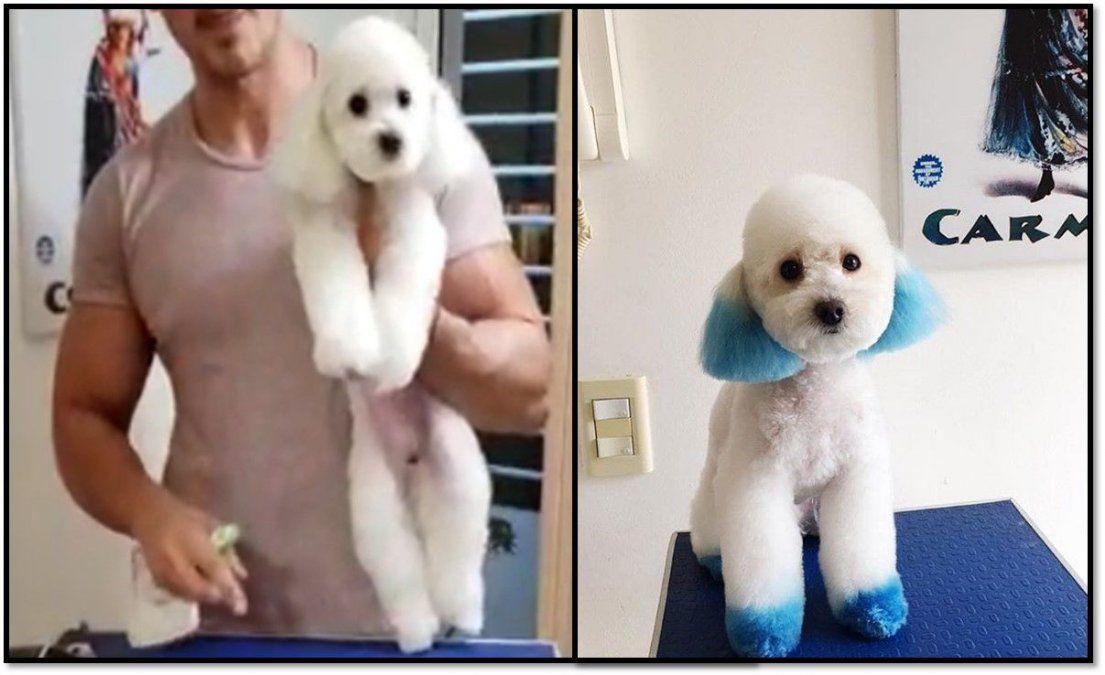 La Asociación civil de Peluqueros Caninos Argentinos apoya a Carmen Barbieri por la acusación de maltrato animal